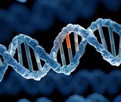 Bệnh hen suyễn có di truyền không